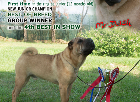 BEST IN SHOW SHAR PEI