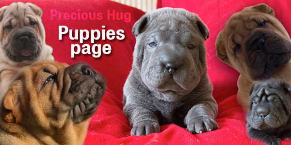 puppies page