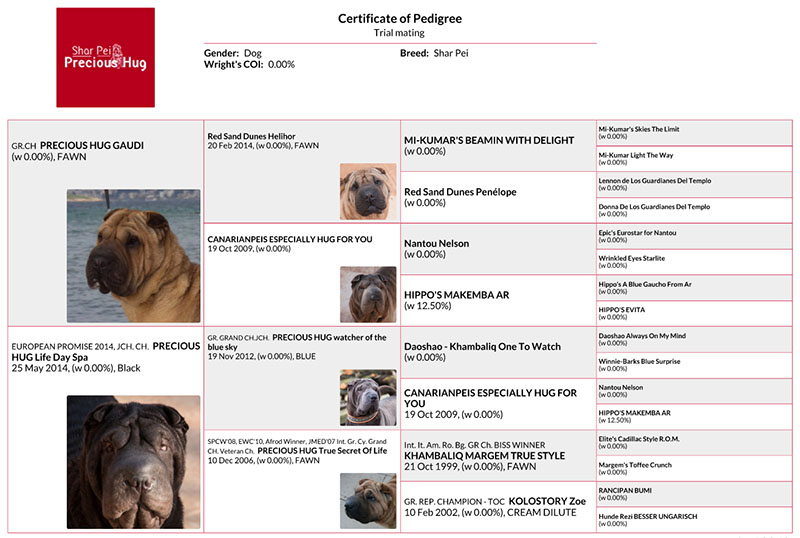 gaudi spa - pedigree shar pei